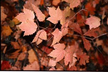 autumnpalettebrushstrokes.jpg