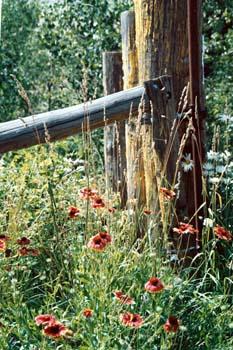 flowersandfenceposts.jpg