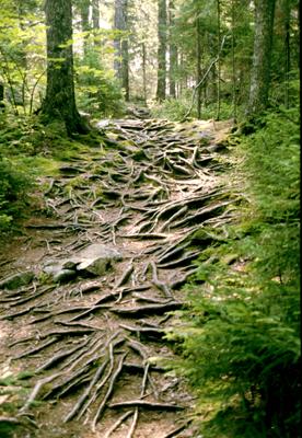 Acadian Woods.jpg